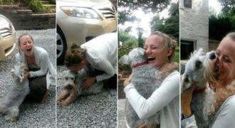 Σκύλος λιποθυμάει από τη χαρά του όταν βλέπει την ιδιοκτήτρια του μετά από 2 χρόνια!