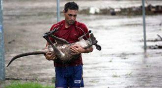 Άνθρωποι που ρισκάρουν για να σώσουν ένα ζώο! Η ανθρωπιά σε όλο της το μεγαλείο…