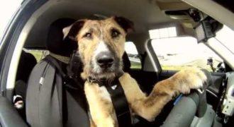 Αυτός ο οδηγός είναι Σκύλος και μάλιστα αδέσποτος!! Και ναι ξέρει να οδηγάει!!
