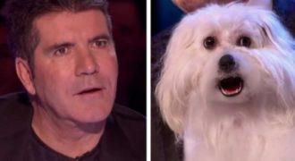 Ένας άντρας ισχυρίστηκε ότι ο σκύλος του μπορεί να τραγουδήσει! Ξαφνικά όλο το ακροατήριο τα έχασε!
