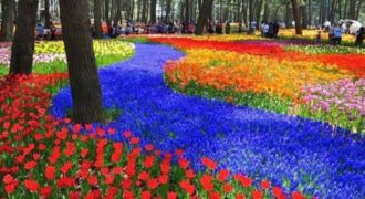Hitachi Park: Το πολύχρωμο πάρκο της Ιαπωνίας που αλλάζει χρώμα ανάλογα με την εποχή!