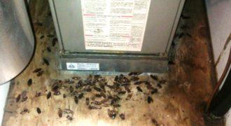 Κατσαρίδες ΤΕΛΟΣ! Μία απίστευτη σπιτική συνταγή Σε Βίντεο για να εξαφανίσετε τις κατσαρίδες από το σπίτι σας.
