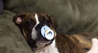 Δεν μπορεί να κοιμηθεί η σκυλίτσα του το βράδυ εάν δεν κάνει αυτό!