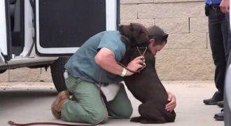 Μια φυλακισμένη γυναίκα μεγάλωσε αυτόν το σκύλο μέσα στην φυλακή. Δείτε τι έγινε όταν τον αποχαιρέτησε