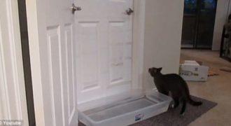 Αυτή η γάτα έχει ένα ιδιαίτερο ταλέντο που θα σας αφήσει άφωνους!