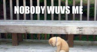 Πώς αισθάνεται ένα σκυλάκι όταν το εγκαταλείπεις; Συγκλονιστικό video..