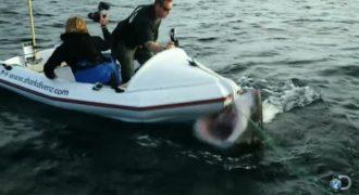 Συγκλονιστικό: Η στιγμή που καρχαρίας επιτίθεται σε τηλεοπτικό συνεργείo!