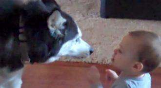 Η μητέρα έπιασε το μωρό της να μιλάει με τον σκύλο τους. Η συζήτηση; Απίστευτη!