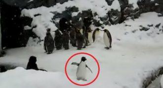 Έδωσαν ecstasy σε πιγκουίνο και τον τράβηξαν βίντεο
