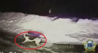 Ένας αστυνομικός ακολούθησεένα σκυλί μέσα στην ερημιά,με το προαίσθημα πως υπήρχε κάποιος κίνδυνος … Τελικάείχε δίκιο.