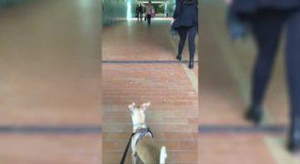 Σκύλος βλέπει την ιδιοκτήτρια του μετά από καιρό. Δείτε την υπέροχη και συγκινητική αντίδρασή του!