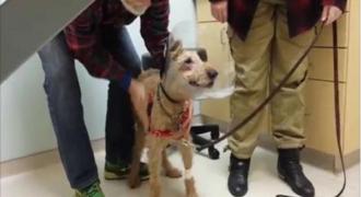 Αυτός ο σκύλος ήταν τυφλός για όλη του τη ζωή. Δείτε την αντίδρασή του όταν βλέπει για πρώτη φορά!