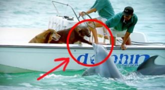 Ανεβαίνει μέχρι την επιφάνεια της θάλασσας και χαιρετά το σκύλο με τον πιο απροσδόκητο τρόπο. ΦΑΝΤΑΣΤΙΚΟ βίντεο!