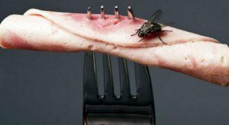 Μύγα ακούμπησε το φαγητό σας; Απλά δείτε το βίντεο…