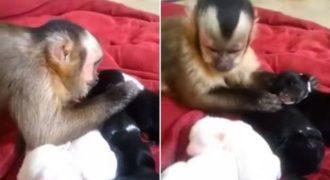 Παίρνοντας μαθήματα από τα ζώα