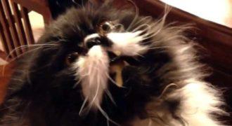 Τι κάνει το παγωτό σε μια λιχούδα γάτα (video)