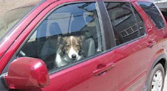 Ένας άντρας έσωσε τον σκύλο που πέθαινε σε ένα αυτοκίνητο που έβραζε από τη ζέστη, κάνοντας κάτι πολύ έξυπνο.