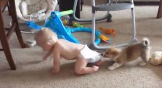 Το κουτάβι αρπάζει την πάνα του μωρού! Κοιτάξτε την τρομερή αντίδραση του μωρού. Είναι τόσο απίθανο!