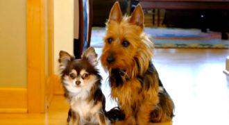 Ρωτάει τα σκυλάκια της ποιο από τα δυο τα… έκανε στην κουζίνα. Η αντίδραση τους θα σας κάνει να γελάσετε!