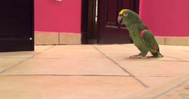 Funny-Parrot-Laughs-Like-Villian-1200×627