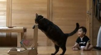 Γάτα μαθαίνει σε μωρό πως να περπατάει (Video)