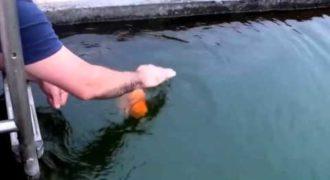 Βάζει τα χέρια του μέσα στο νερό για να πιάσει αυτό το ψάρι! Λεπτά αργότερα τα πράγματα αρχίζουν και γίνονται περίεργα… [video]