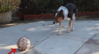 Ισχυρίζονται ότι είναι ο πιο έξυπνος σκύλος στον κόσμο! Εμείς πάντως μείναμε άφωνοι μετά το βίντεο…