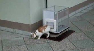 O γάτος που χρησιμοποιεί το ασανσέρ για να μετακινηθεί