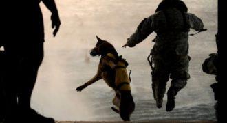 Αυτά είναι τα πιο άριστα εκπαιδευμένα σκυλιά της Αμερικής. Σκηνές βγαλμένες από ταινία…