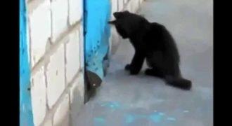 Φοβερό βίντεο: Γάτα κάνει ό,τι μπορεί για να ελευθερώσει έναν εγκλωβισμένο σκύλο