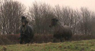 Μετά από χρόνια, έφεραν ξανά σε επαφή 2 άλογα που ήταν φίλοι και δείτε αντιδράσεις! (Βίντεο)