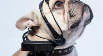 Απίστευτο: Το gadget που θα κάνει τους σκύλους να μιλούν! (Βίντεο)