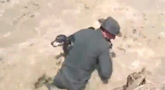 Απίστευτη ενέργεια αστυνομικού. Έσωσε ένα σκυλάκι από χείμαρο και του έδωσε το φιλί της ζωής, για να βγάλει το νερό που είχε καταπιεί. (βίντεο)…