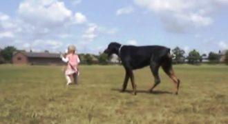 Δείτε πώς ένα Ντόπερμαν προστατεύει αυτό το κορίτσι! (Βίντεο)