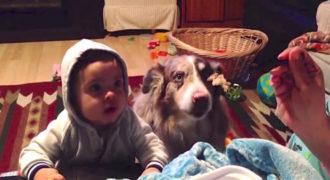 """Σκύλος «μιλάει» και λέει τη λέξη 'μαμά"""", πριν από το μωρό, για να φάει πρώτος! Ξεκαρδιστικό"""