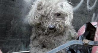Αυτό το τυφλό σκυλάκι ζούσε σε ένα σωρό από σκουπίδια! Σήμερα όμως έχει μεταμορφωθεί σε…