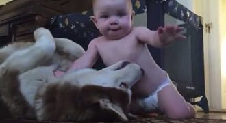 Αυτό το μωράκι έχει ένα πολύ ιδιαίτερο δεσμό με αυτό το σκύλο ράτσας Χάσκυ! Δείτε το όμορφο βίντεο!