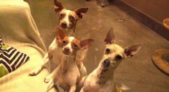 Αρχικά φαίνονται σαν 3 φυσιολογικά σκυλιά. Προσέξτε όμως το μεσαίο και θα καταλάβετε…