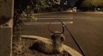 Μια άγνωστη πλησιάζει αυτό το αδέσποτο σκυλάκι. Την ώρα όμως που του περνάει το κολάρο…