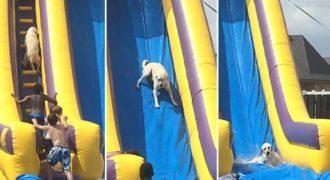 Ξεκαρδιστικό βίντεο: Ένας Σκύλος ανακάλυψε πως οι Νεροτσουλήθρες δεν είναι μόνο για διασκέδαση των παιδιών
