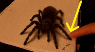 Μοιάζει με μια αράχνη. Αλλά όταν το αγγίξει! Δεν θα πιστέψεις στα μάτια σου.