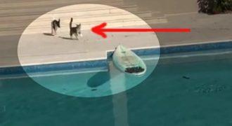 Δείτε τι έκανε μια γάτα για να γλιτώσει από τον σκύλο που την κυνηγούσε! Απίστευτο;