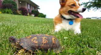 Δείτε την αντίδραση του σκύλου μόλις καταλαβαίνει ότι αυτό που είναι δίπλα του ΔΕΝ είναι πέτρα! Απίστευτος…