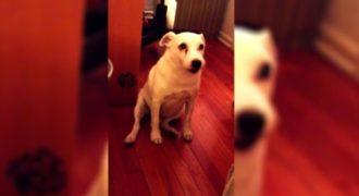 Μάλωσαν αυτό τον σκύλο γιατί ήταν άτακτος! Δείτε την ξεκαρδιστική αντίδραση του!