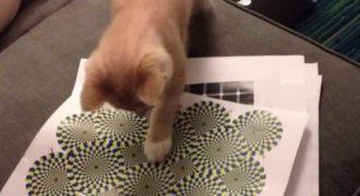 Πως αντιδρά μία γάτα σε οφθαλμαπάτη; (video)