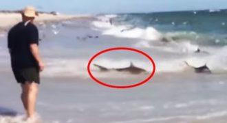 Παρατήρησαν κάτι παράξενο στην παραλία. Μόλις πλησίασαν; Έμειναν με το στόμα ανοιχτό!