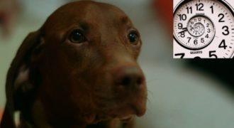 Τα σκυλιά αντιλαμβάνονται τον χρόνο? Δείτε το πείραμα βίντεο!