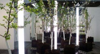 Απίστευτο! 40 Διαφορετικού είδους Φρούτα μεγαλώνουν σε Αυτό το μοναδικό Δέντρο!! (Βίντεο)