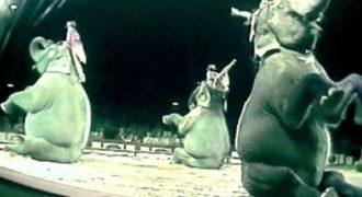 Στην αρχή όλοι γέλασαν, αλλά κάτι δεν πήγαινε καλά. Στη συνέχεια έκανε το αδιανόητο και έδειξε γιατί τα άγρια ζώα δεν ανήκουν στο τσίρκο.