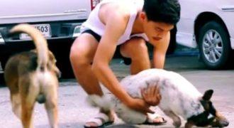 Περιφέρεται στους δρόμους μαζεύοντας αδέσποτα σκυλιά και στη συνέχεια κάνει αυτό…